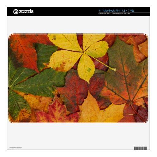 Hojas brillantemente coloreadas de la caída 27,9cm MacBook air calcomanía