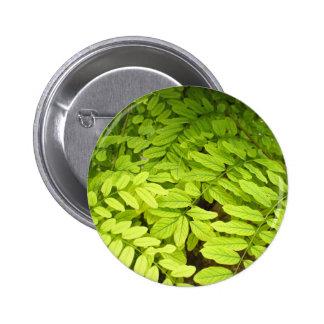 Hojas brillantes, verdes, pequeñas, ovales del pin redondo de 2 pulgadas
