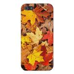 Hojas caidas en otoño iPhone 5 cárcasas