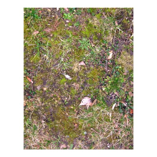 Hojas caidas secadas en la hierba molida - totalme tarjeta publicitaria