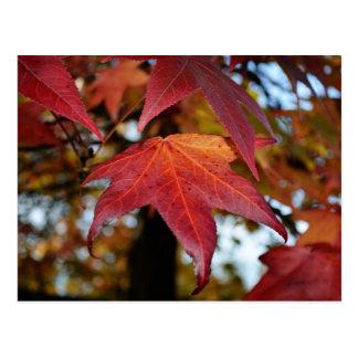 Hojas cambiantes del otoño postales