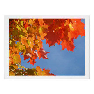 Hojas coloridas de la caída del otoño de la natura