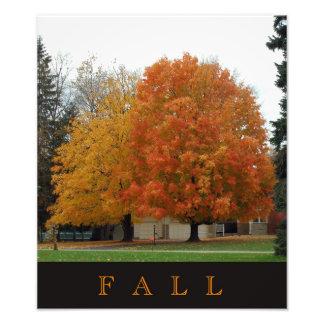 Hojas coloridas de la caída en árboles en otoño fotografía