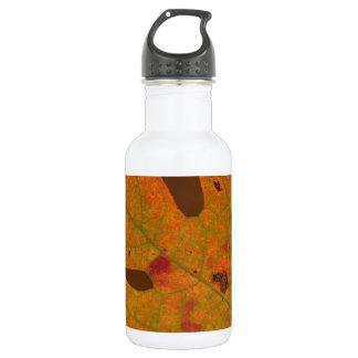 Hojas coloridas del albidum del sasafrás del otoño
