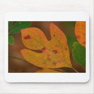 Hojas coloridas del albidum del sasafrás del otoño tapetes de raton