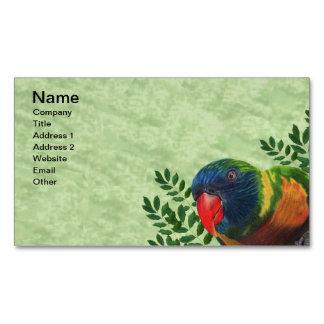 Hojas coloridas del loro del Macaw