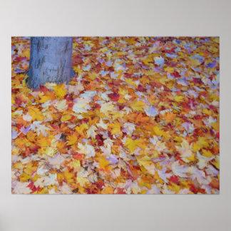 Hojas coloridas del otoño impresiones