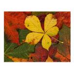 Hojas coloridas del otoño postal
