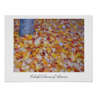 Hojas coloridas del otoño poster