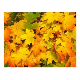 Hojas coloridas del otoño tarjetas postales