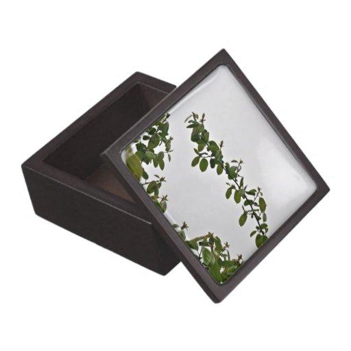 Hojas contra el cielo nublado caja de regalo de calidad