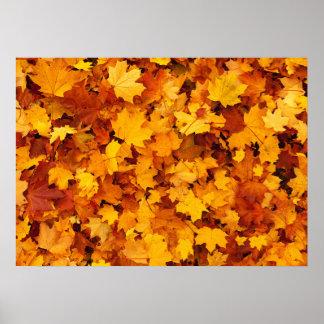 Hojas de arce del otoño póster