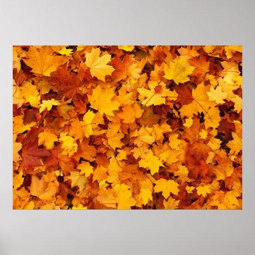 Hojas de arce del otoño poster