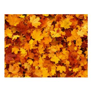 Hojas de arce del otoño tarjetas postales