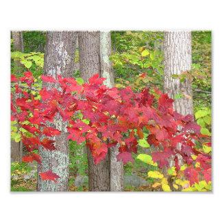 Hojas de arce en la impresión de la foto del otoño fotografía