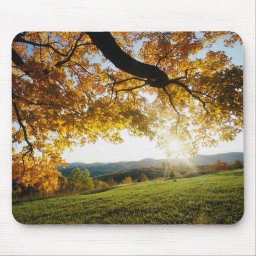 Hojas de arce en otoño alfombrilla de raton