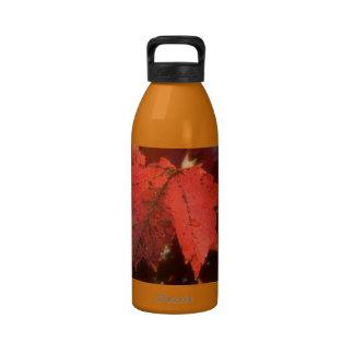 Hojas de arce en rojo del otoño botellas de beber