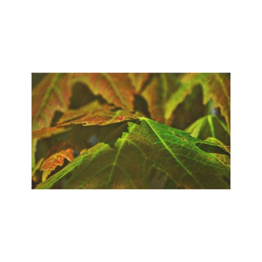 hojas de arce impresiones de lienzo