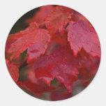 Hojas de arce rojas brillantes pegatinas redondas