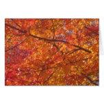 Hojas de arce rojas en otoño tarjeton
