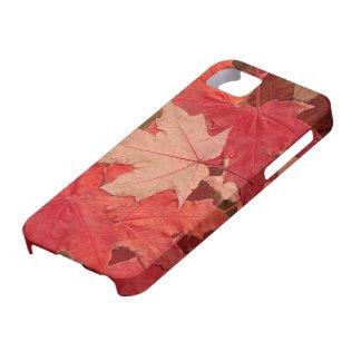 Hojas de arce rojas funda para iPhone SE/5/5s