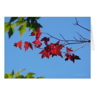 Hojas de arce rojas tarjeta de felicitación