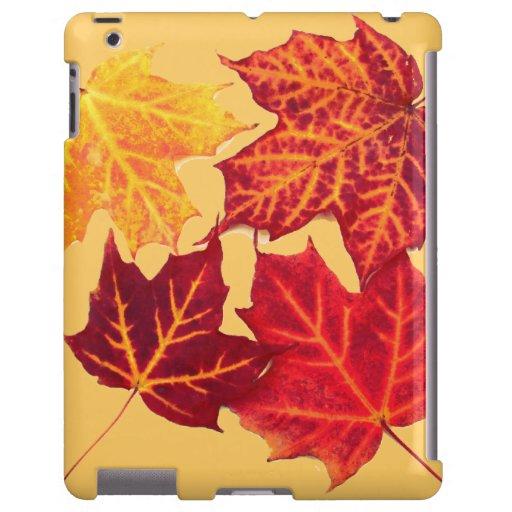 hojas de arce rojas y amarillas del otoño vibrante