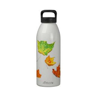 Hojas de arce rojo naranja verde amarillo en bla botella de beber