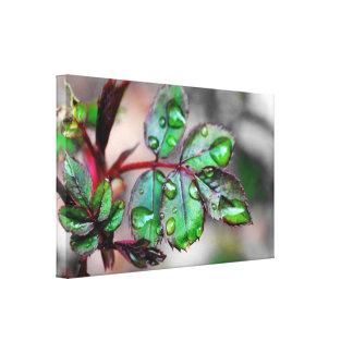 Hojas de florecimiento del rosa con las gotitas de lienzo envuelto para galerias