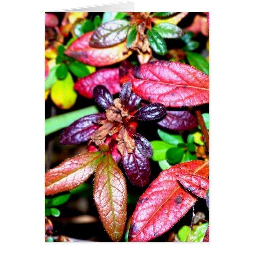 Hojas de la azalea del otoño tarjeta de felicitación