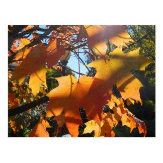 Hojas de la caída en la luz y las sombras postal