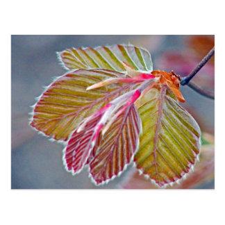 hojas de la haya de cobre tarjeta postal