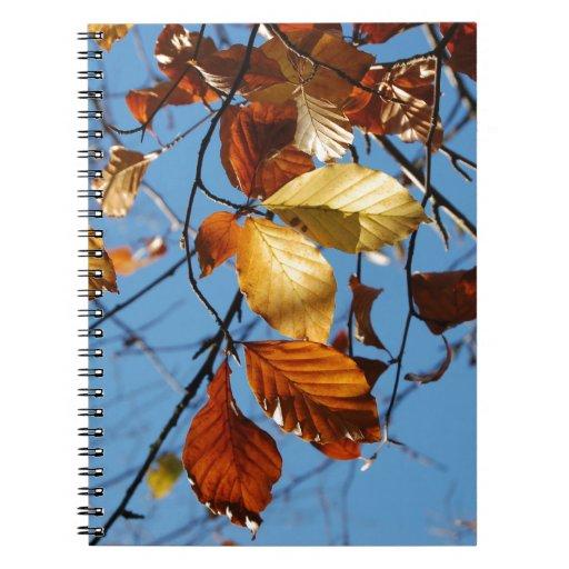 Hojas de la haya del otoño libretas
