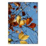 Hojas de la haya del otoño tarjeta de felicitación