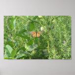 Hojas de la mariposa posters