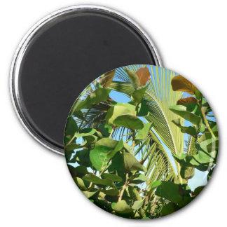 Hojas de la palma y de la planta imán de frigorifico