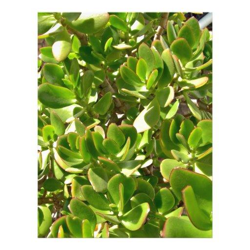 Hojas de la planta del jade tarjetón