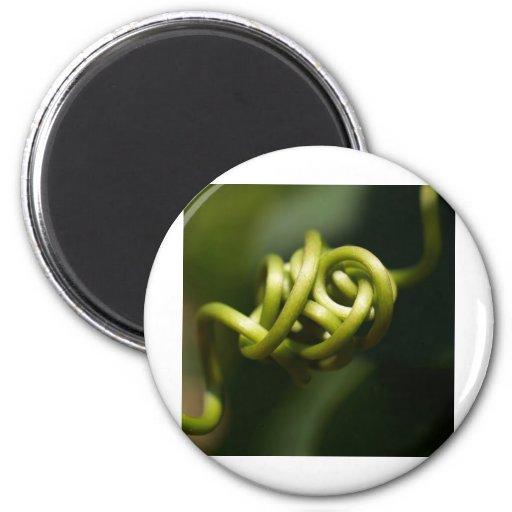 hojas de la planta imán redondo 5 cm