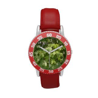 Hojas de la planta verde reloj