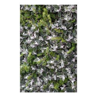 hojas de la primavera de arbustos en el modelo de papelería personalizada