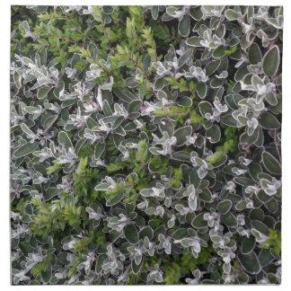 hojas de la primavera de arbustos en el modelo de servilleta imprimida