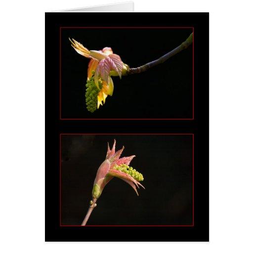 Hojas de la primavera tarjetas
