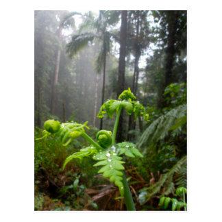 Hojas de la selva tropical con la postal de las