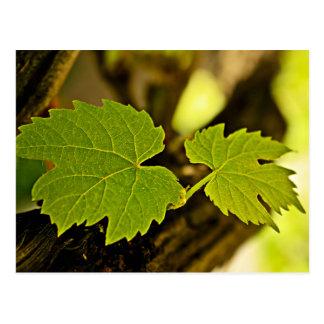 Hojas de la uva que crece fuera de un árbol tarjeta postal
