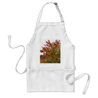 Hojas de los árboles del otoño de la foto de color delantal