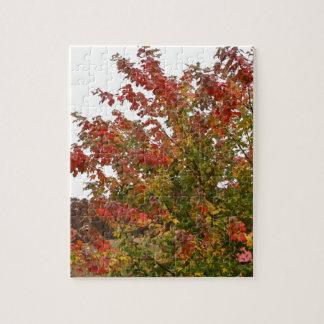 Hojas de los árboles del otoño de la foto de color rompecabeza con fotos