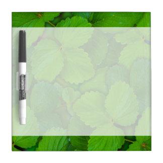 Hojas de menta verdes de Tulsi de la albahaca Pizarras Blancas