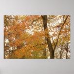 hojas de otoño 1 impresiones