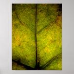 Hojas de otoño 2 impresiones