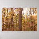 hojas de otoño 3 impresiones